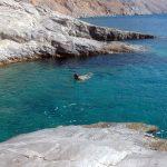 Chalara-Seehundbaenke