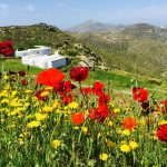 church-and-poppies-amorgos