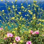flowers-amorgos